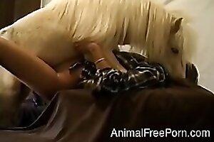 AnimalFreePorn