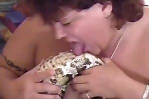 beastiality video snake-porn