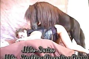 dick horse-sex
