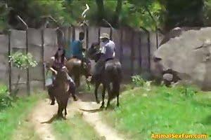 stallion zoofilia