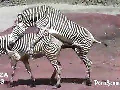 zoosex, free-beastiality-videos