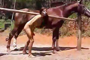 horse porn animal cum