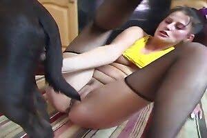 porn bestiality porn