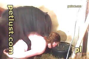 bestiality horny