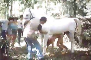 horse-porn zoo-sex